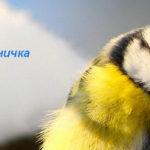 Птичка синичка