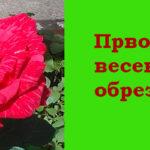 Мой сад: обрезка роз в марте