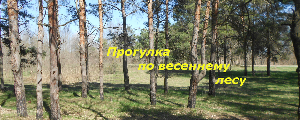 Фотозарисовки: Прогулка по весеннему лесу